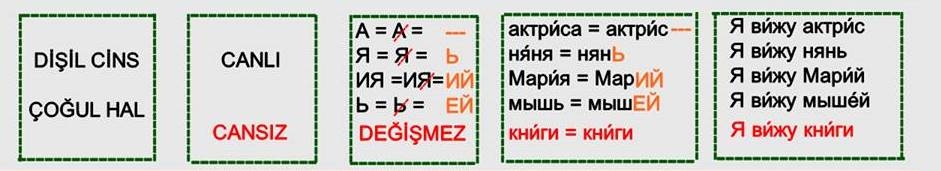 Rusça İsmin İ Hali 12